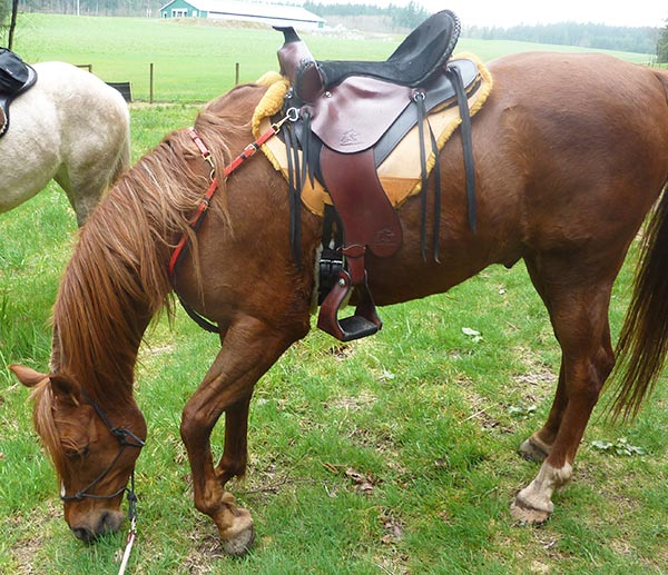 Lynne D and her Synergist Saddle