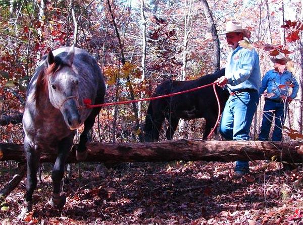 Moses Woodson Horsemanship