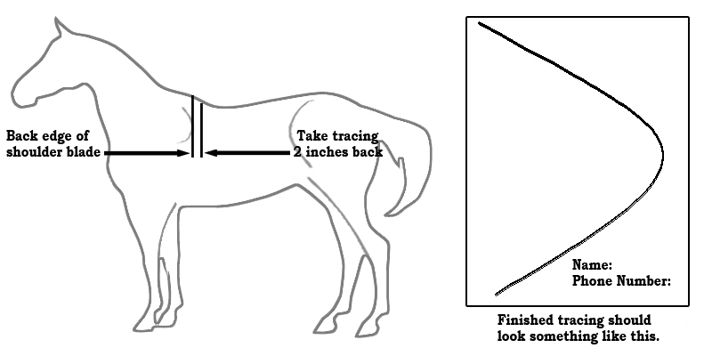 Horse or Mule Wither Tracing