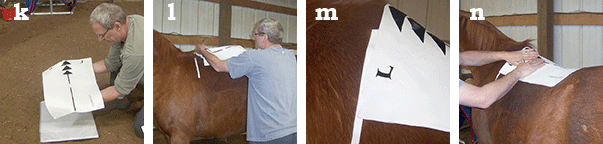 EQUImeasure saddle fitting kit