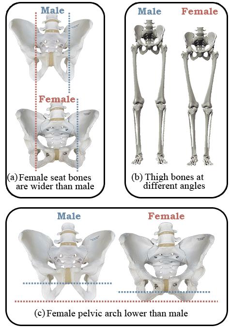 Saddles for women seat comparison