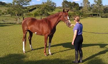 horse posture