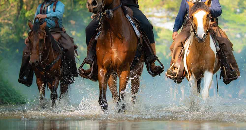 Horses running thru a river.