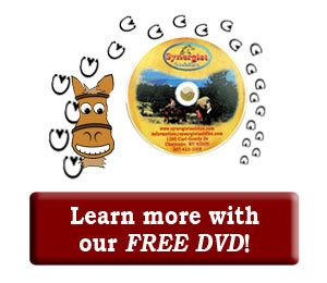 Order Custom Saddle DVD