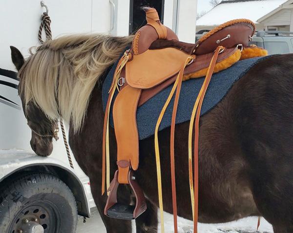 My Saddle Fitting Story ~ Synergist Saddles