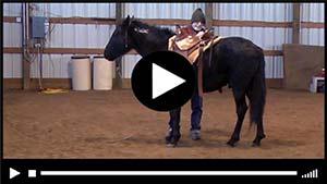 Smokey gets a saddle!