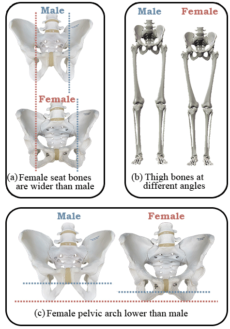 Saddles for Women Male vs Female Comparison